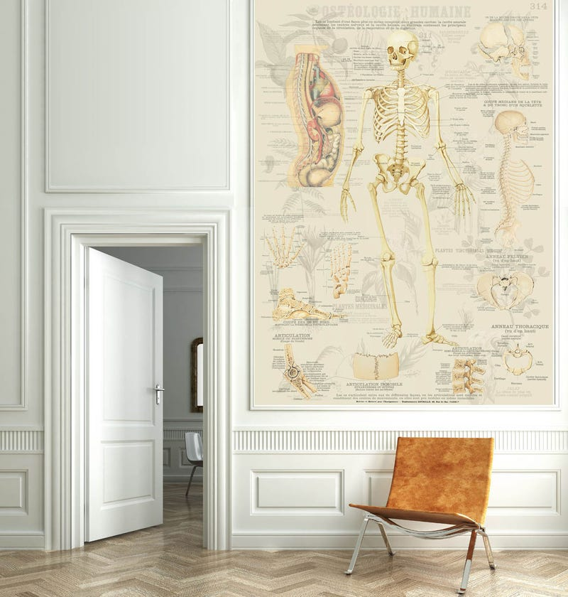 This Wild Wallpaper Turns Your Home Into a Natural History Museum