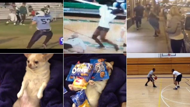 These Are Our Favorite Vines