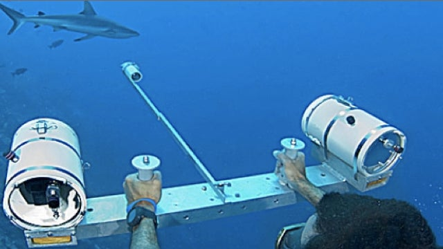 How do you measure free-roaming sharks without being bitten?