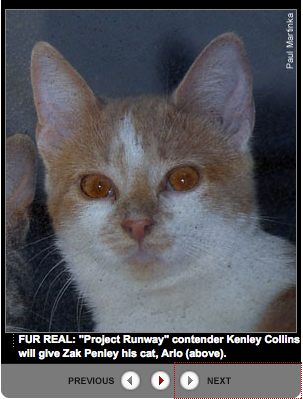 Kenley Collins Says Ex Can Keep That Cat She Just Threw at Him