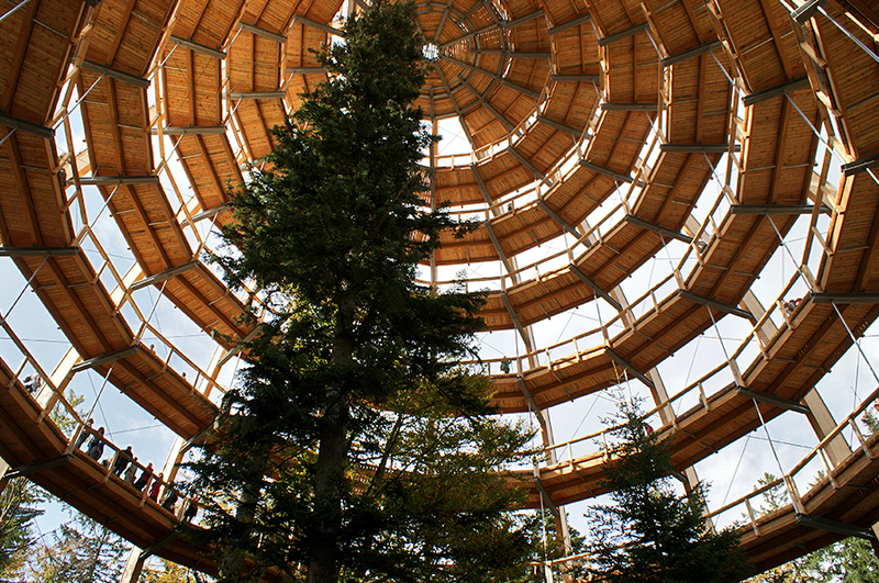 Germany's new 18-story Tree Top Walk is shaped like a giant egg