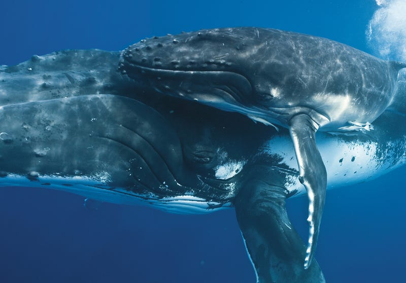 These beautiful portraits of whales will make you weep at the wonder of the universe (no, really)