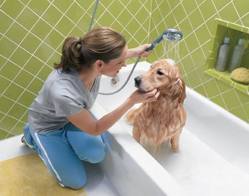 Shower a dog