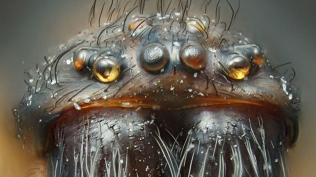 These Incredible Microscopic Photos of Small Things Seem Unreal