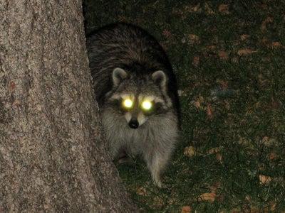 The Animal Uprising Claims Pat Summitt