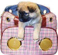 Lifepop Stereo Pet Carrier: iPods for Dogs - no, Really