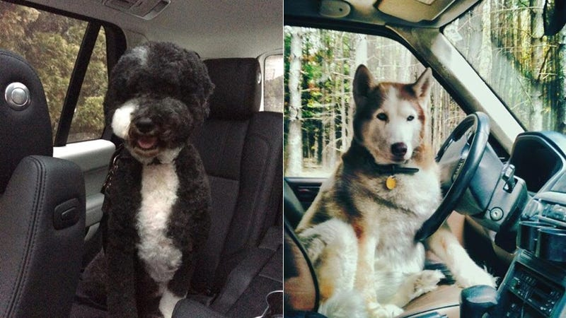Top 12 Cutest Dogs In Land Rovers For 'National Love Your Pet Day'