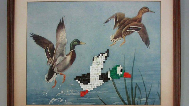 Ducks, Limited