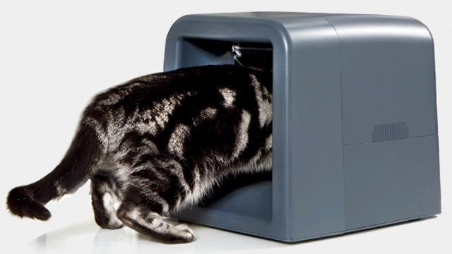 Protected Feeder Puts Your Fat Tabby on Portion Control