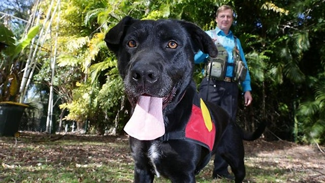 Introducing Migaloo, the world's first canine archeologist