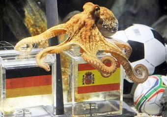Psychic Octopus Retires