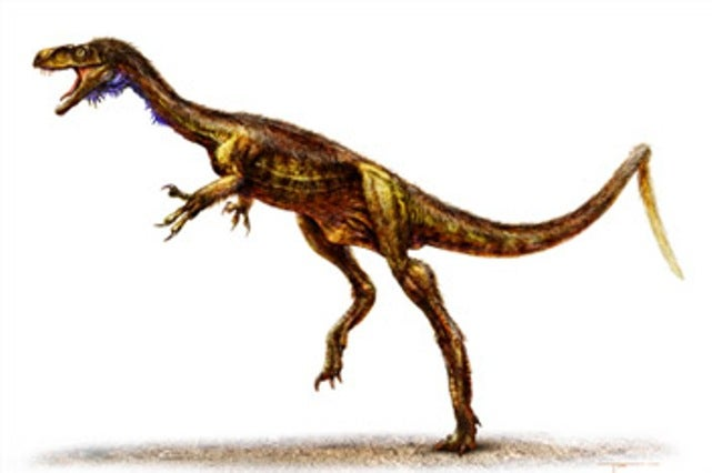 The great-grandfather of the vicious T. Rex weighed only 10 pounds