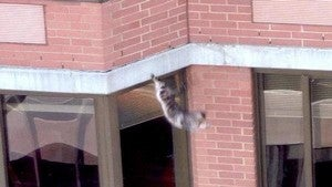 Amazing Cat Survives 26-Story Fall