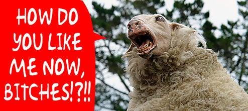 Modified New Zealand Wool Resists Blowtorches, Dog Bites, Sharp Knives