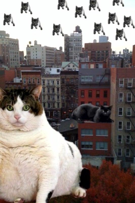 CatPaint!