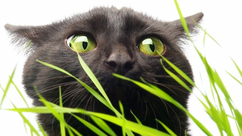 World's Best Cat Fetches Weed, World's Worst Cat Owners Narc On It