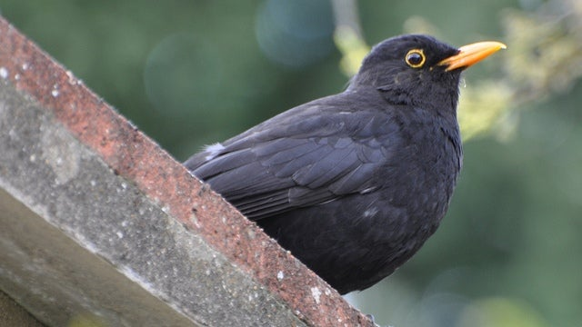 Moving to the city could split birds into separate species