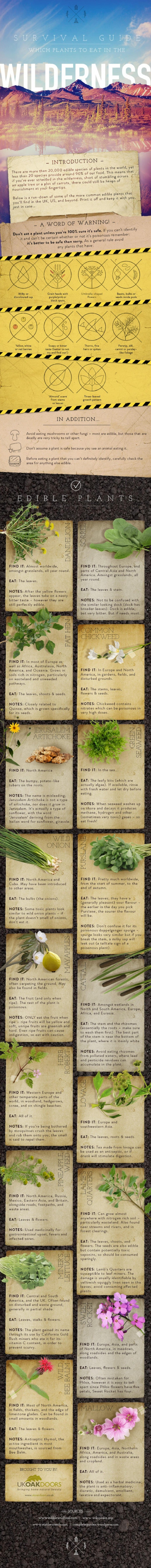 Learn About Common Edible Plants In the Wild with This Visual Guide