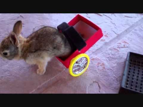 The Bunny Video To End All Bunny Videos