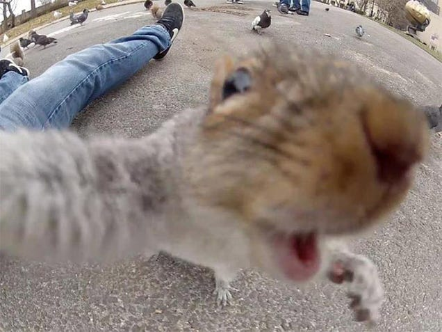 If nobody owns these cool animal selfies, we should give them the money