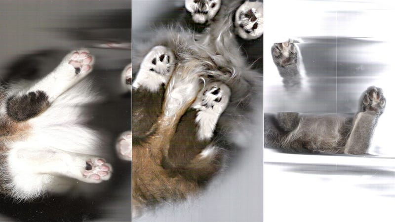 Here's What It Looks Like When You Scan a Cat