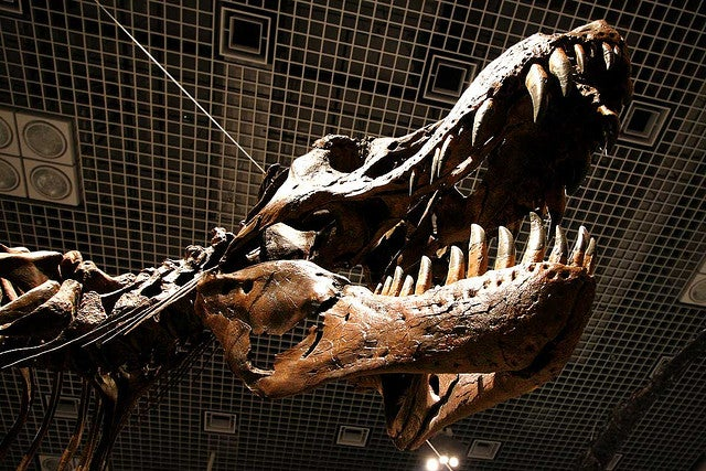 Science: T. Rex Big, Scary
