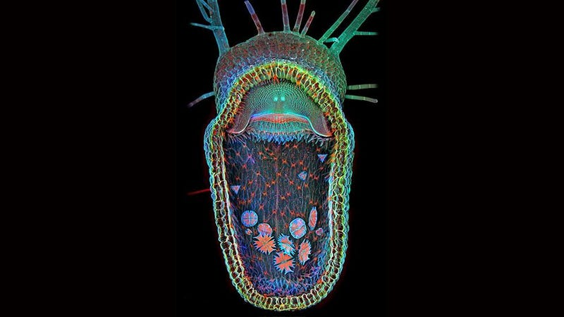 Behold the Monstrous Beauty of This Year's Coolest Microscopic Images