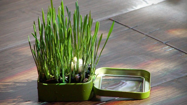 Add Some Greenery to Your Workspace with an Altoids Tin Mini Garden