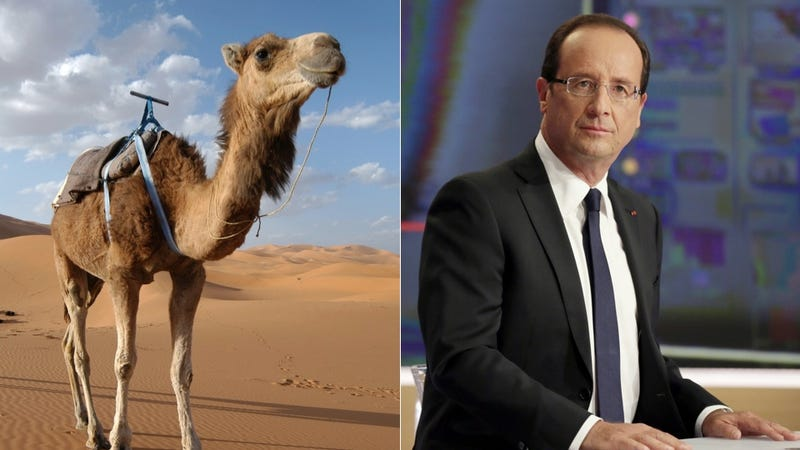The French President's Camel Was 'Eaten in Mali'