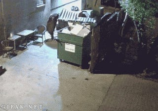 Very Clever Bear Takes Restaurant's Dumpster To Go