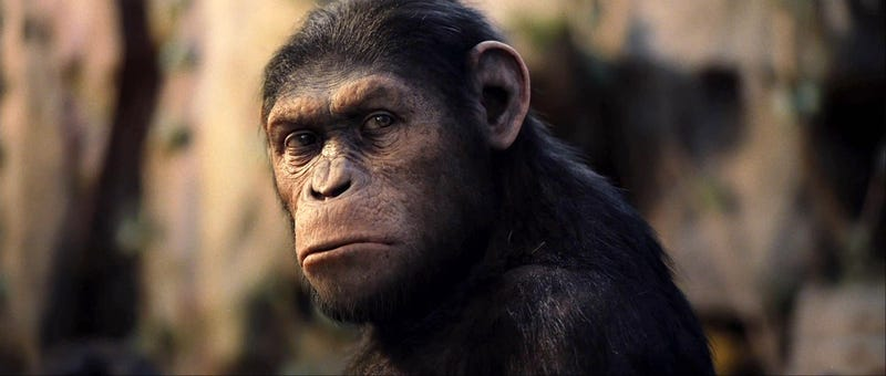 Rise of the Planet of the Apes is a surprise contender for best movie of the summer