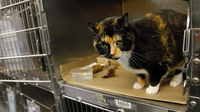 Cat Lost 5 Years Ago Turns Up Across The Country