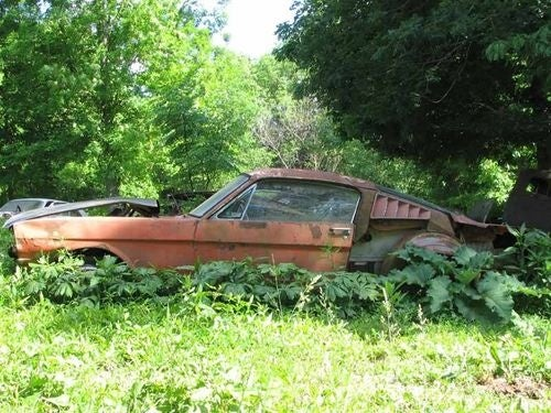 Abandoned Cars Down In The Kentucky Weeds