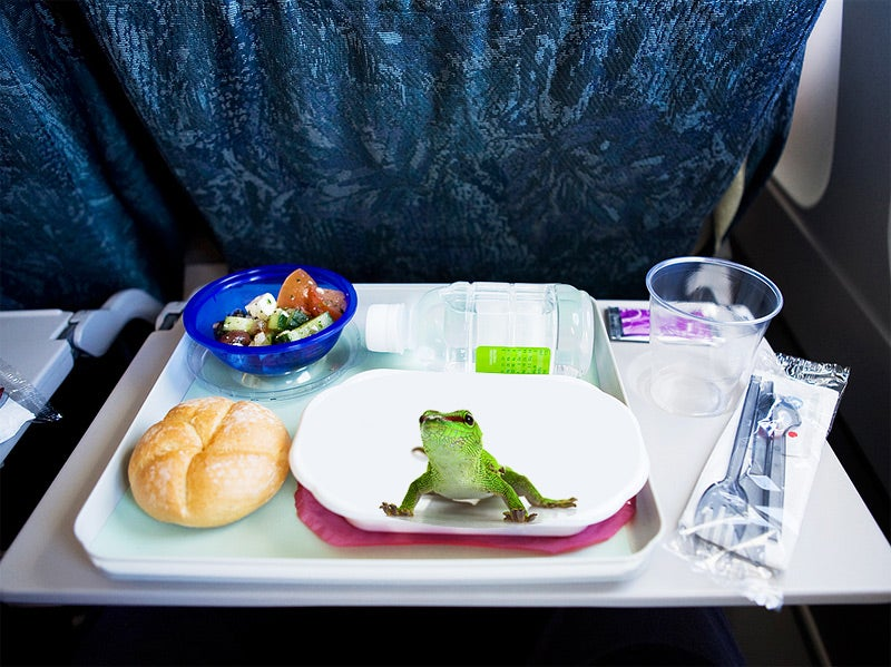 What Happens When You Sue an Airline For Putting a Lizard in Your Food?