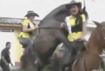 Video: Horny Horses Have No Shame