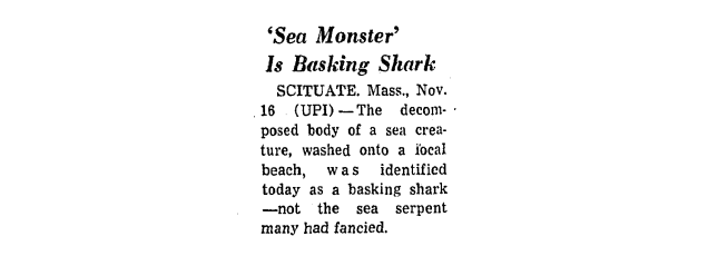 Decomposed Basking Shark Found in 1971 Was Thought to Be Sea Monster