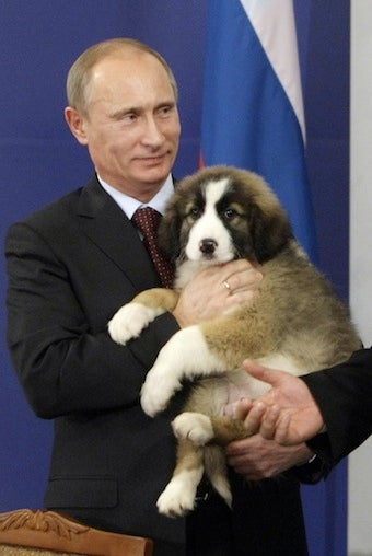 Help Choose a Name for the Prime Minister of Russia's Puppy