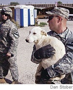 In Iraq, Brave Troops Open The Hotel Rwanda Of Puppies