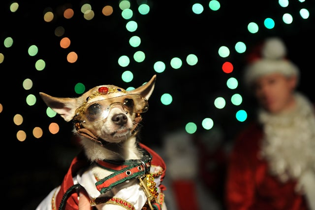 For Some Dogs, The Holidays Are Ruff