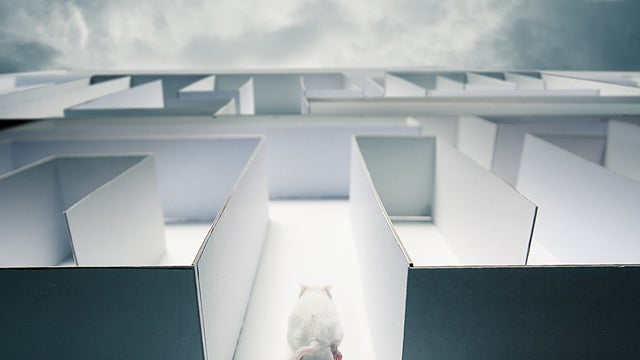 Even Mice Play in Virtual Worlds, For Science