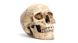 Modern Day Hamlet Finds Skull-Shaped Chip, Good Reminder We'll All Die