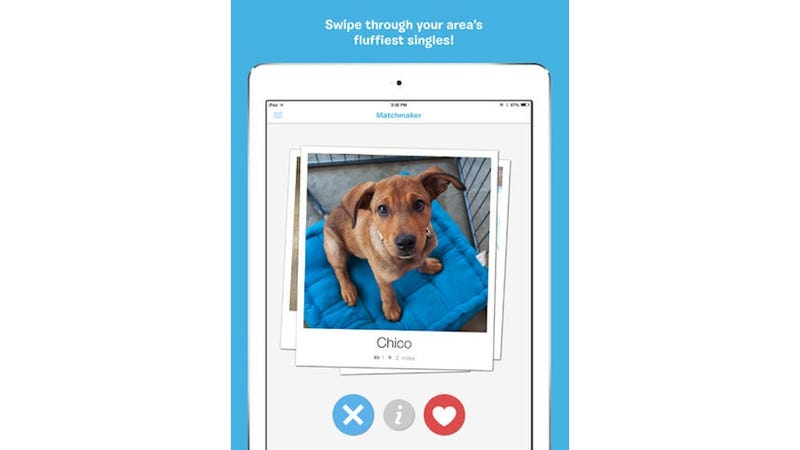 There's Finally a Tinder for Adoptable Dogs