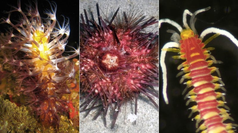 Expedition Finds 300 Species in One Trip to the Philippines