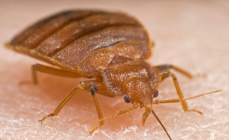 Researchers decode the chemical signals of bed bugs in real time
