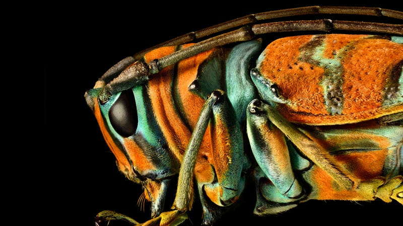 You've Never Seen Insect Portraits Like These