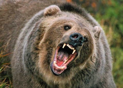 Montana Woman Fends Off Bear with Zucchini