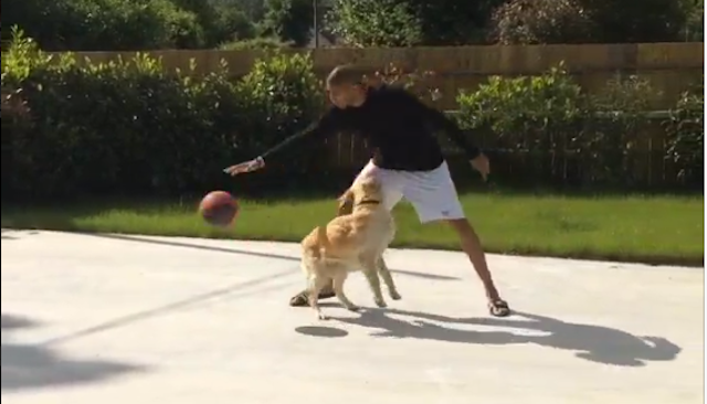 Nic Batum's Dog Is A Very Good Sports Dog