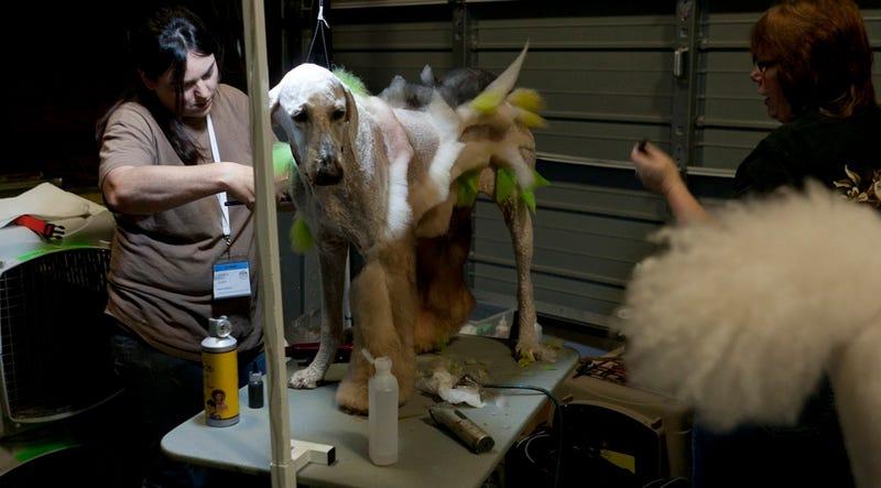 Pêt-à-Porter: Cats And Dogs Dressing Together