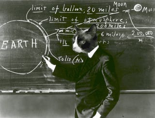 Meet the curious cat scientists of the 1960s