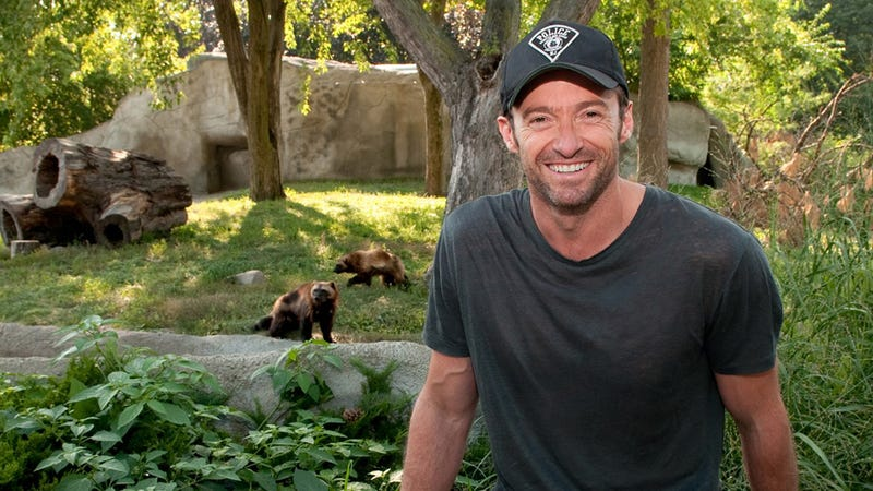 Oh, It's Just Hugh Jackman Hanging Out With Some Wolverines